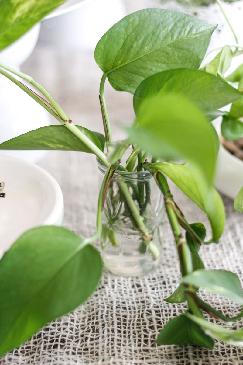 Plant cuttings in styled table arrangement