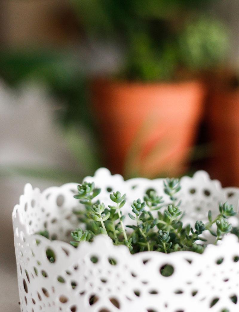 succulent in Ikea metal planter