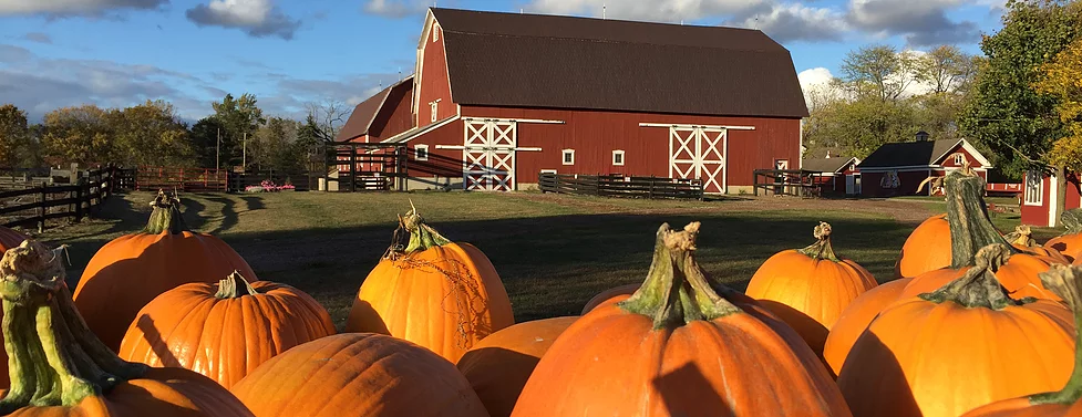 PUMPKIN THEMED ACTIVITIES FOR KIDS • FACE PAINT CORN MAZE • PUMPKIN PAINTING • STORYTIME • & MORE!  IT'S FUN FOR THE WHOLE FAMILY!