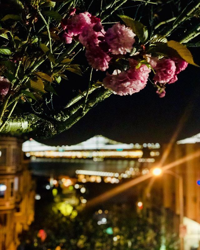 Getting my dose of DC 🌸 in San Francisco 🌉 this beautiful spring evening... speaking of which, LIFE UPDATE: I moved! Officially an SF resident...! Come say hi!