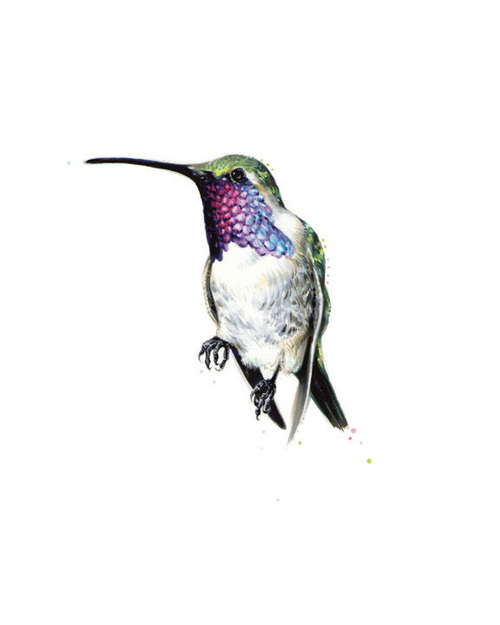 "Lucifer Hummingbird. 2013. Ink. 10"" x 8"""