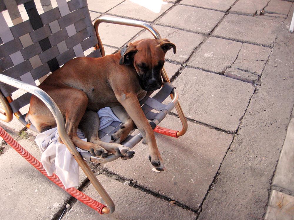 dogonchair.jpg