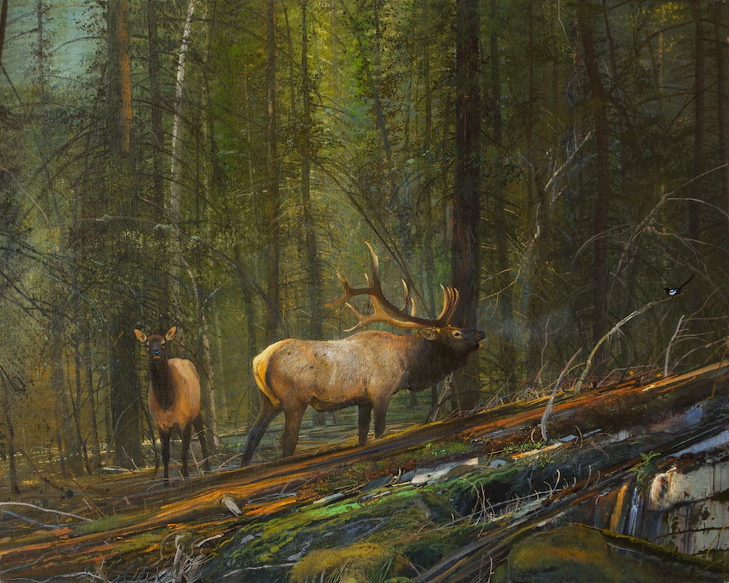 In the Timber, Rocky Mountain Elk