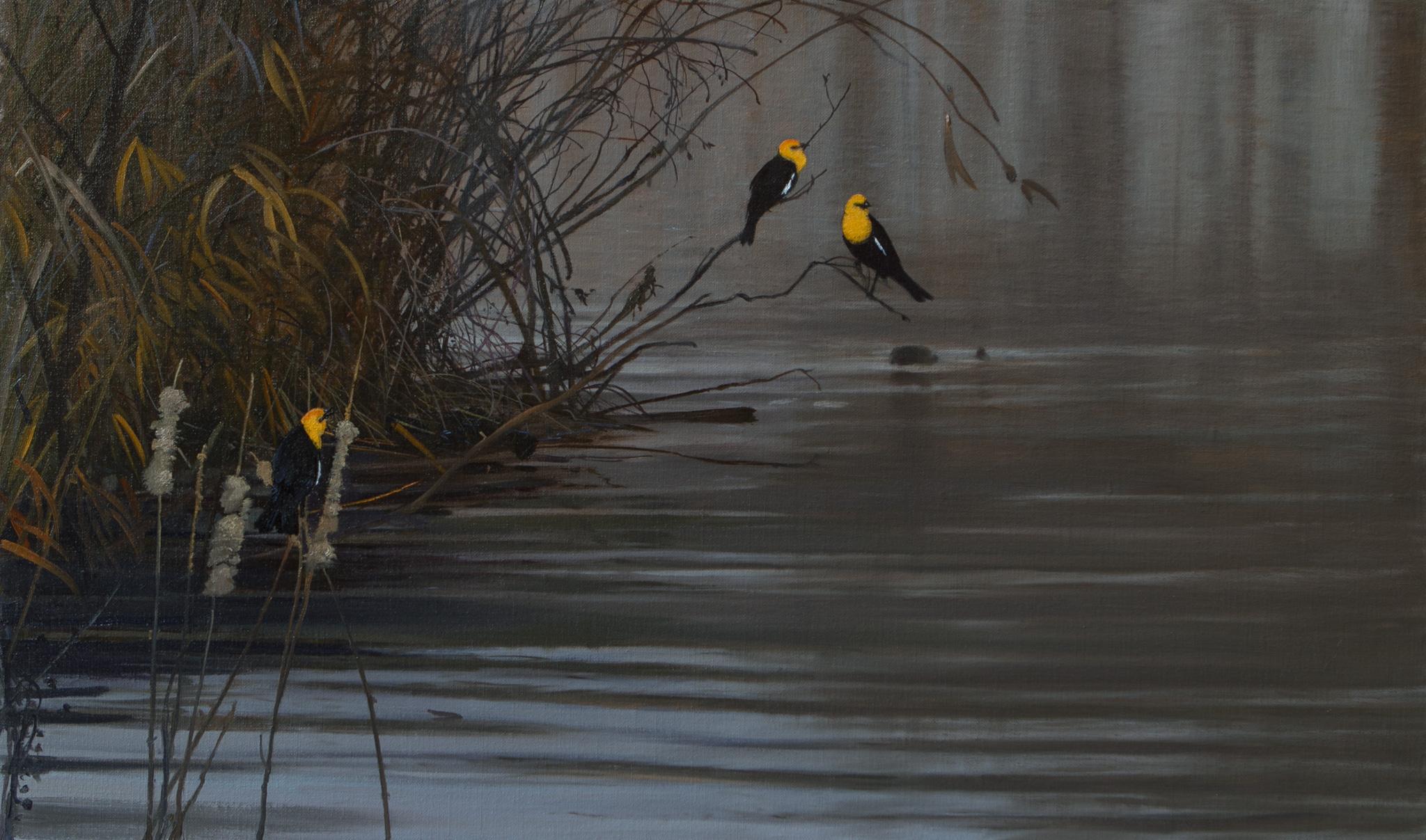 Yellow Headed Blackbirdsby Michael Coleman