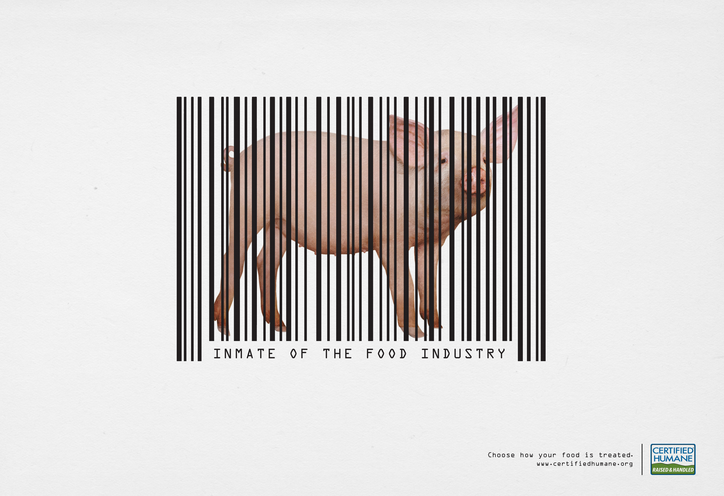 certified_humane_pig.jpg
