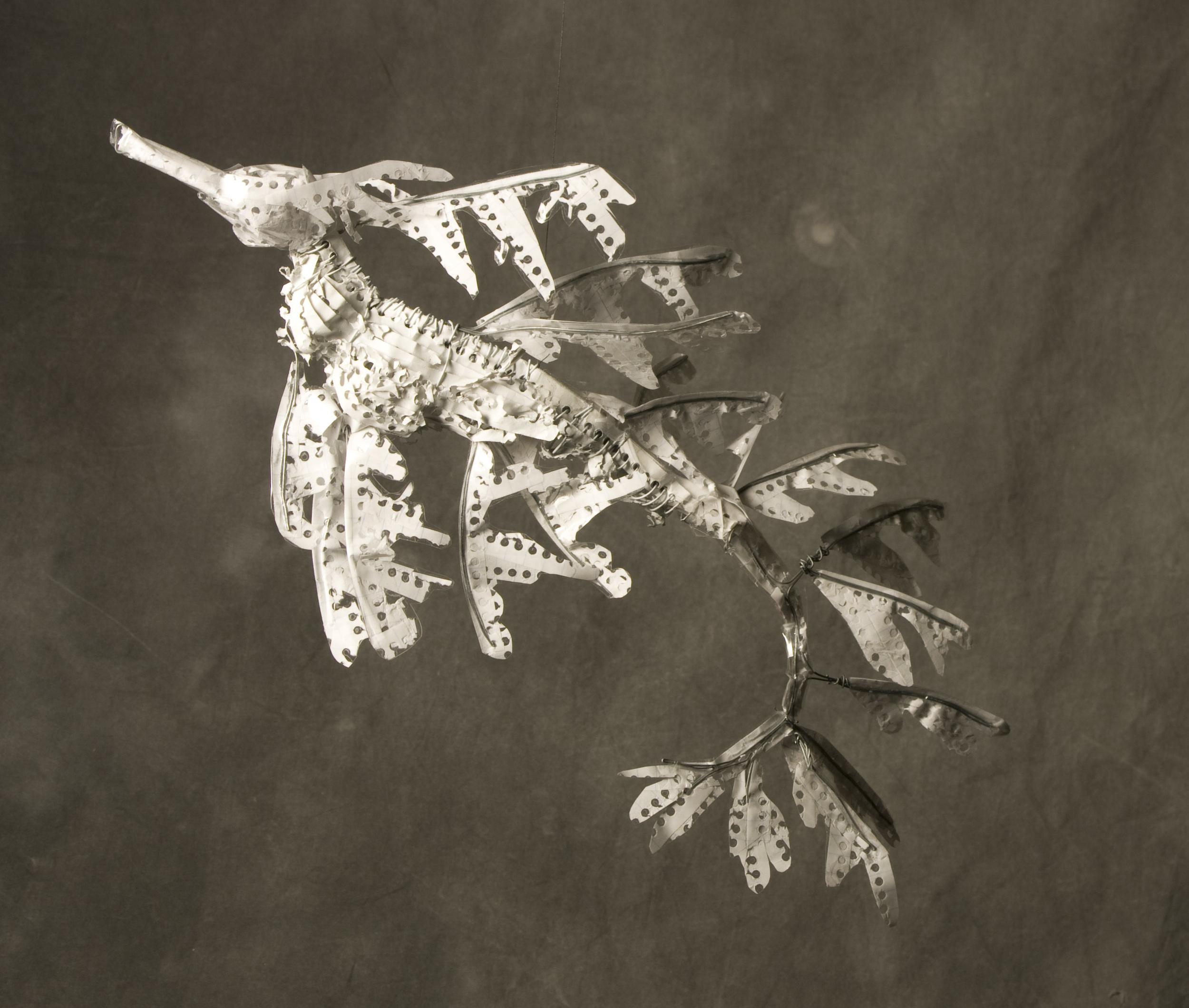 1-leafyseadragon1.jpg