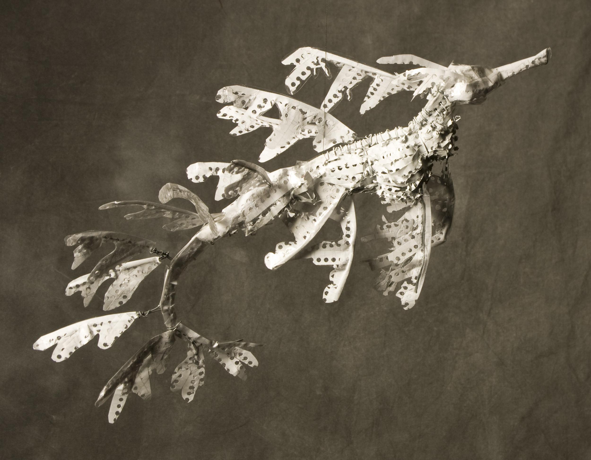 2-leafyseadragon2.jpg