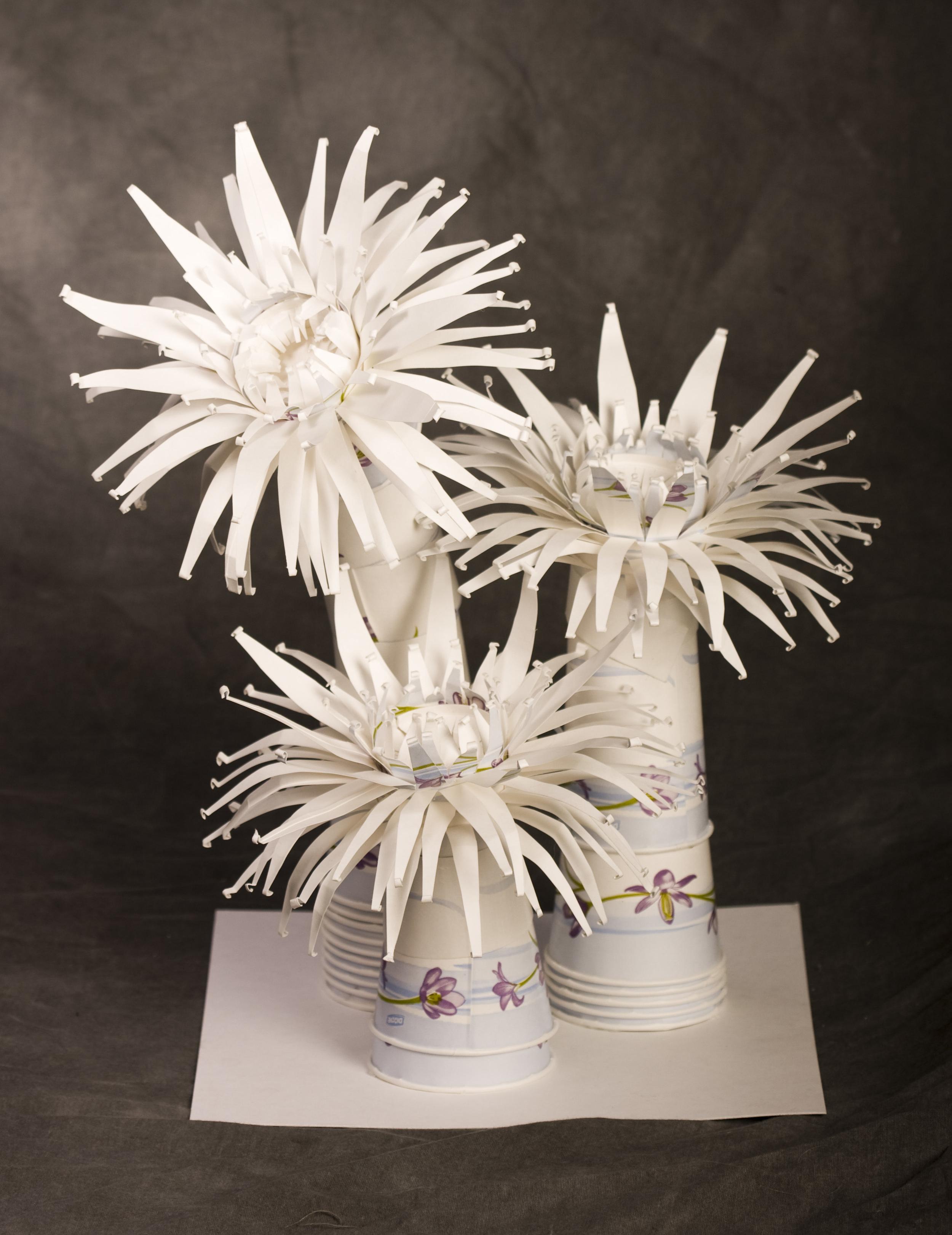 3-anemones1.jpg