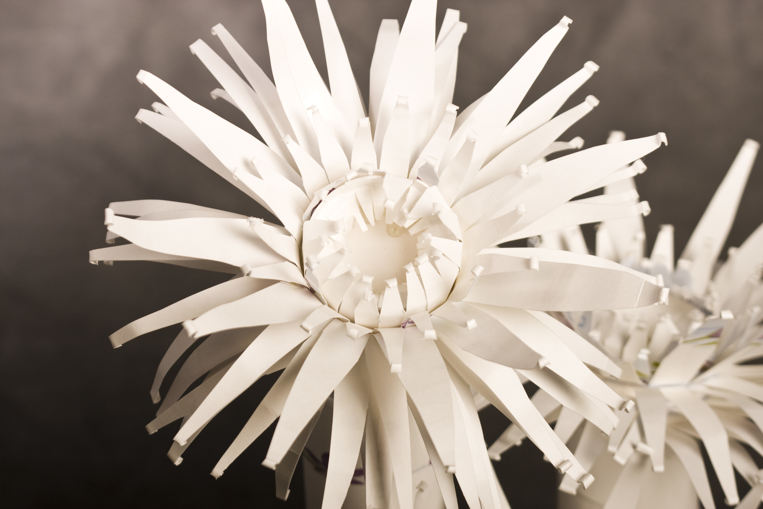 3-anemones2.jpg