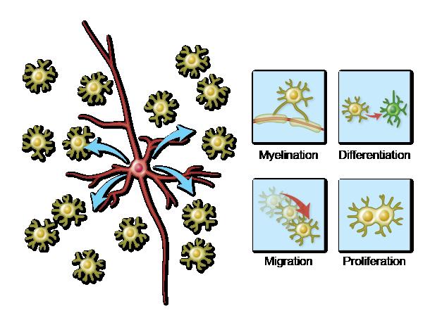 Illustration for Arlotta Lab