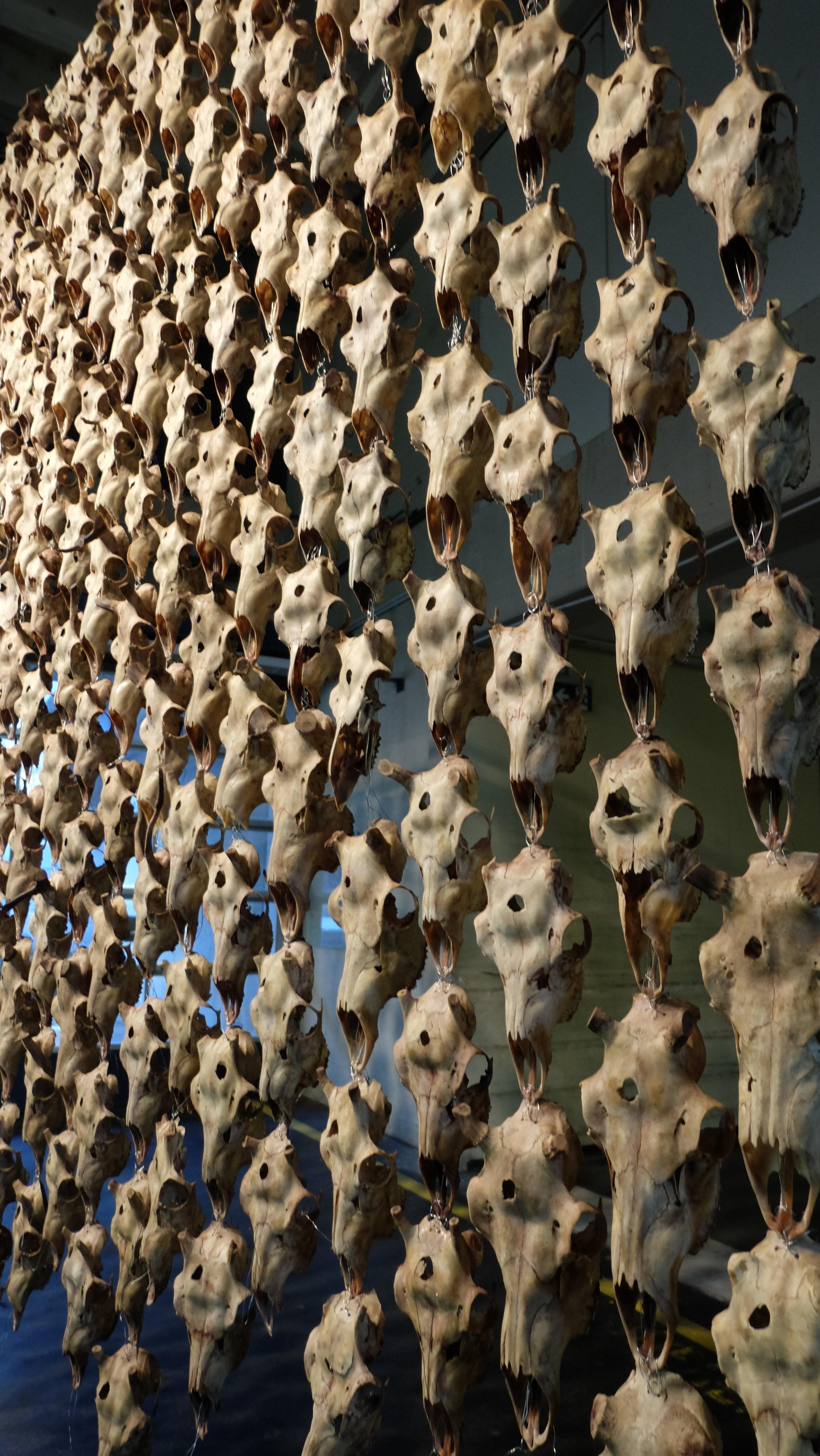 MÁRET ÁNNE SARA,Pile o' Sápmi,2017.  Curtain made from reindeer skulls and metal wire  Neue Neue Galerie (Neue Hauptpost), Kassel.