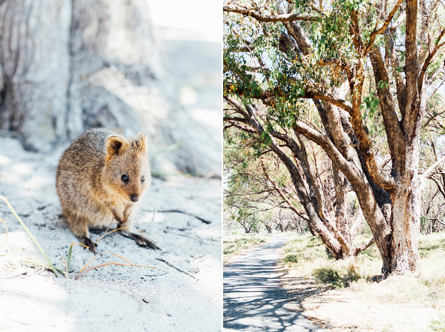 002-perth-photographer-rottnest-island.jpg