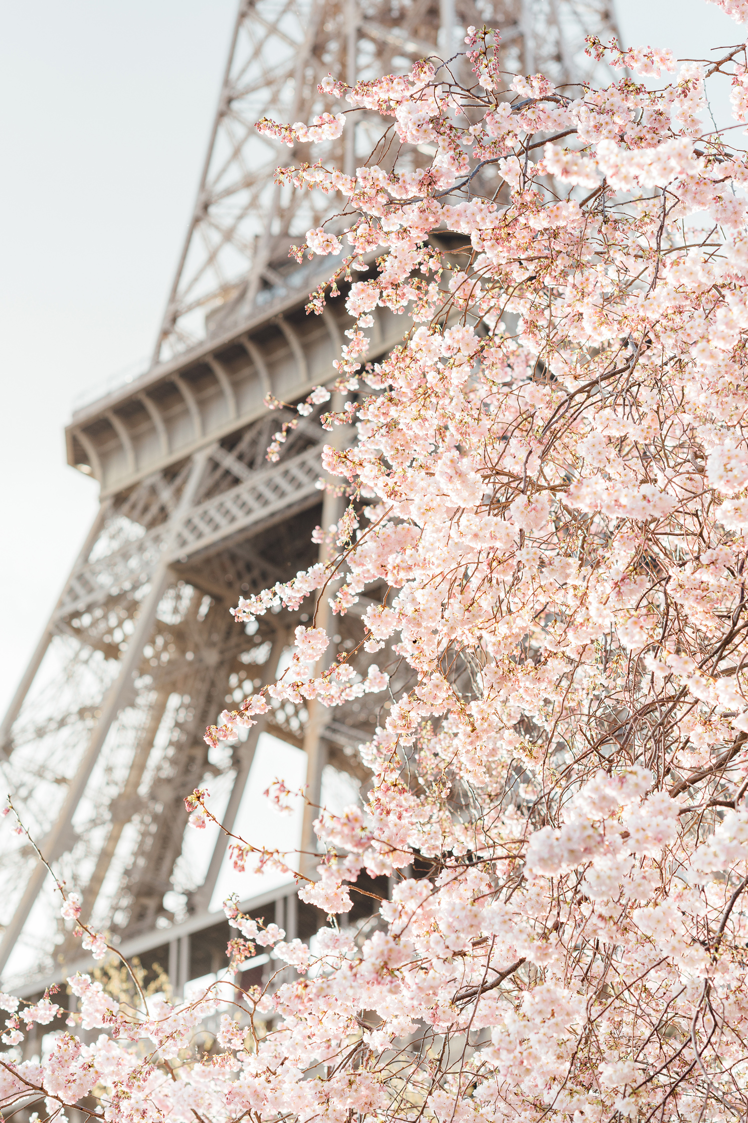002-katie-mitchell-paris-photographer-springtime-cherry-blossom-magnolia-season-in-paris.jpg
