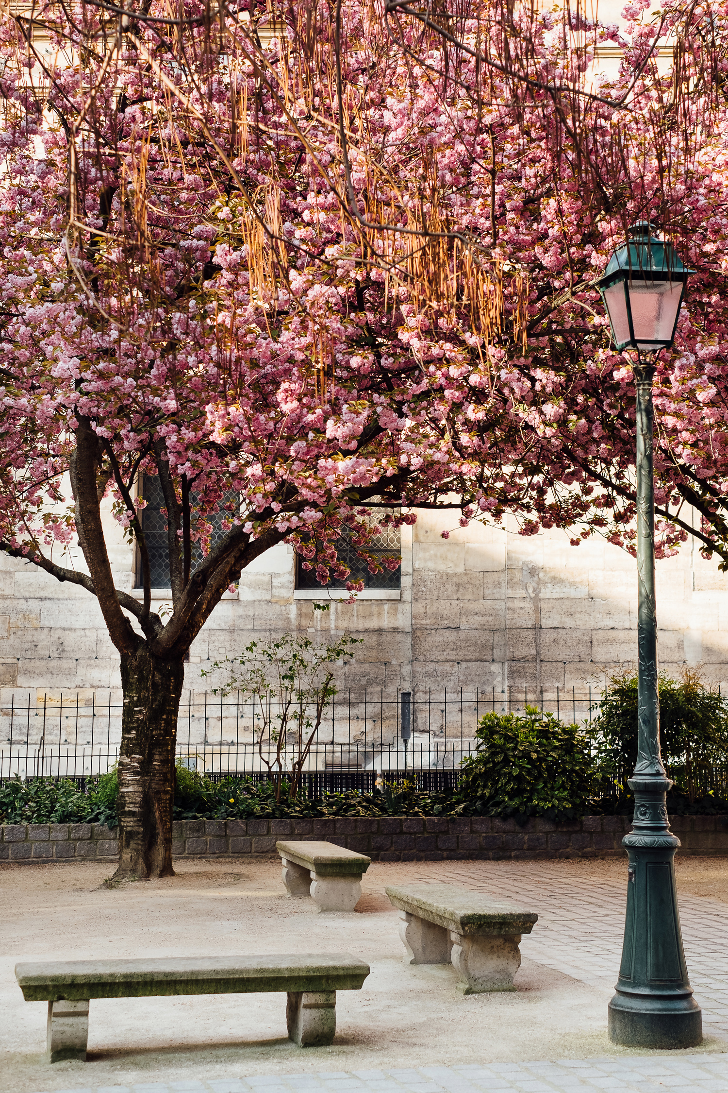 004-katie-mitchell-paris-photographer-springtime-cherry-blossom-magnolia-season-in-paris.jpg