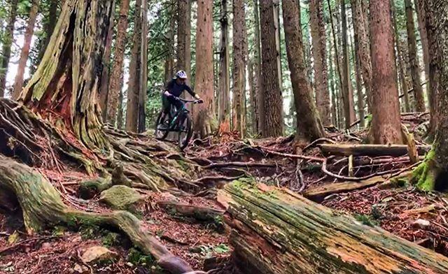 Bookwus, Mt Fromme, North Van - not even gnarly. . #mtb #mountainbike #singletrack #vancouver #northvan #mtbBC #nsmba #explorebc #exploreVanNS #ridingfeelsgood #biketrip #biketravel #bringyourbike #bikebag #bikebagrentals #evoc