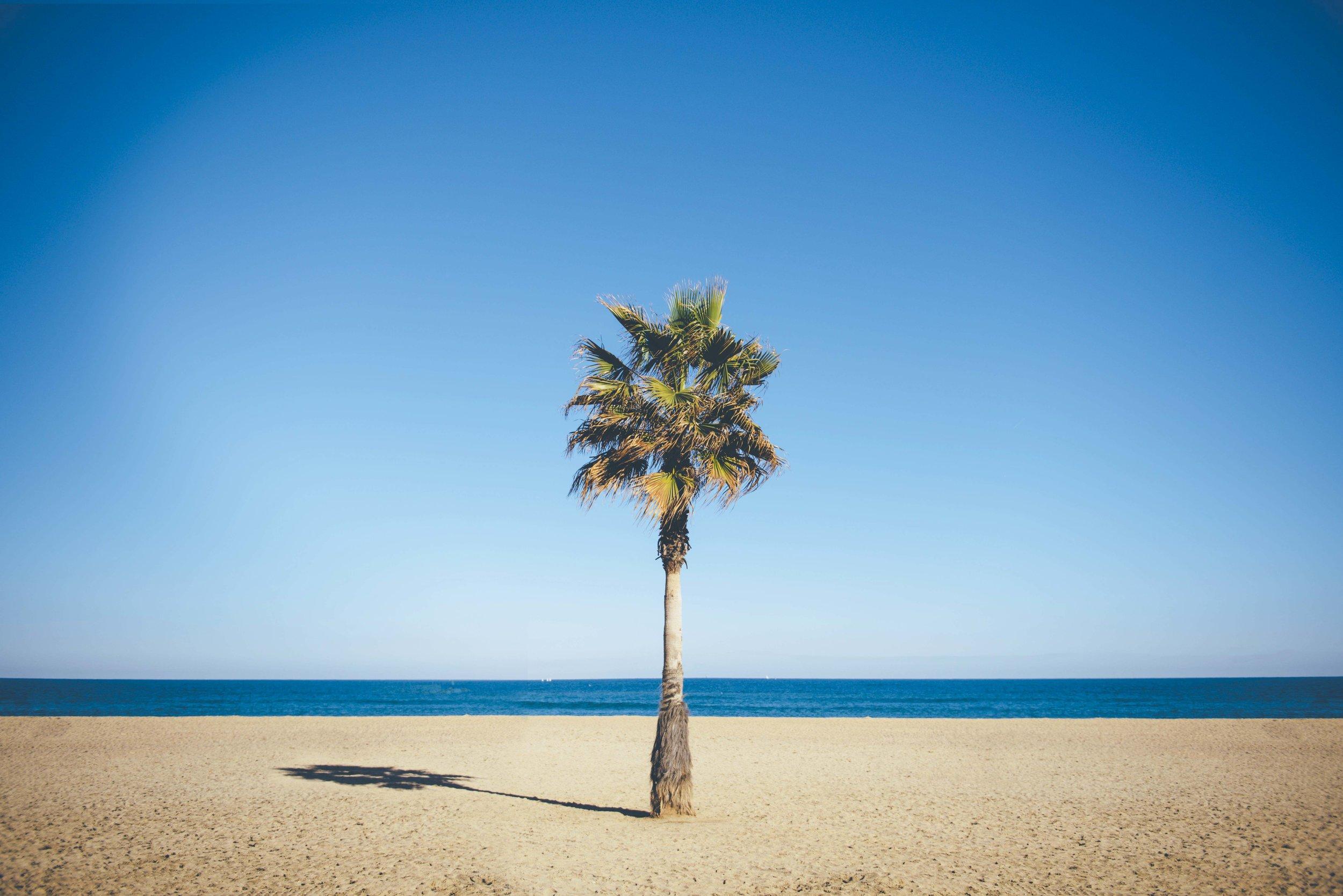 Barcelona Palm Tree.jpg