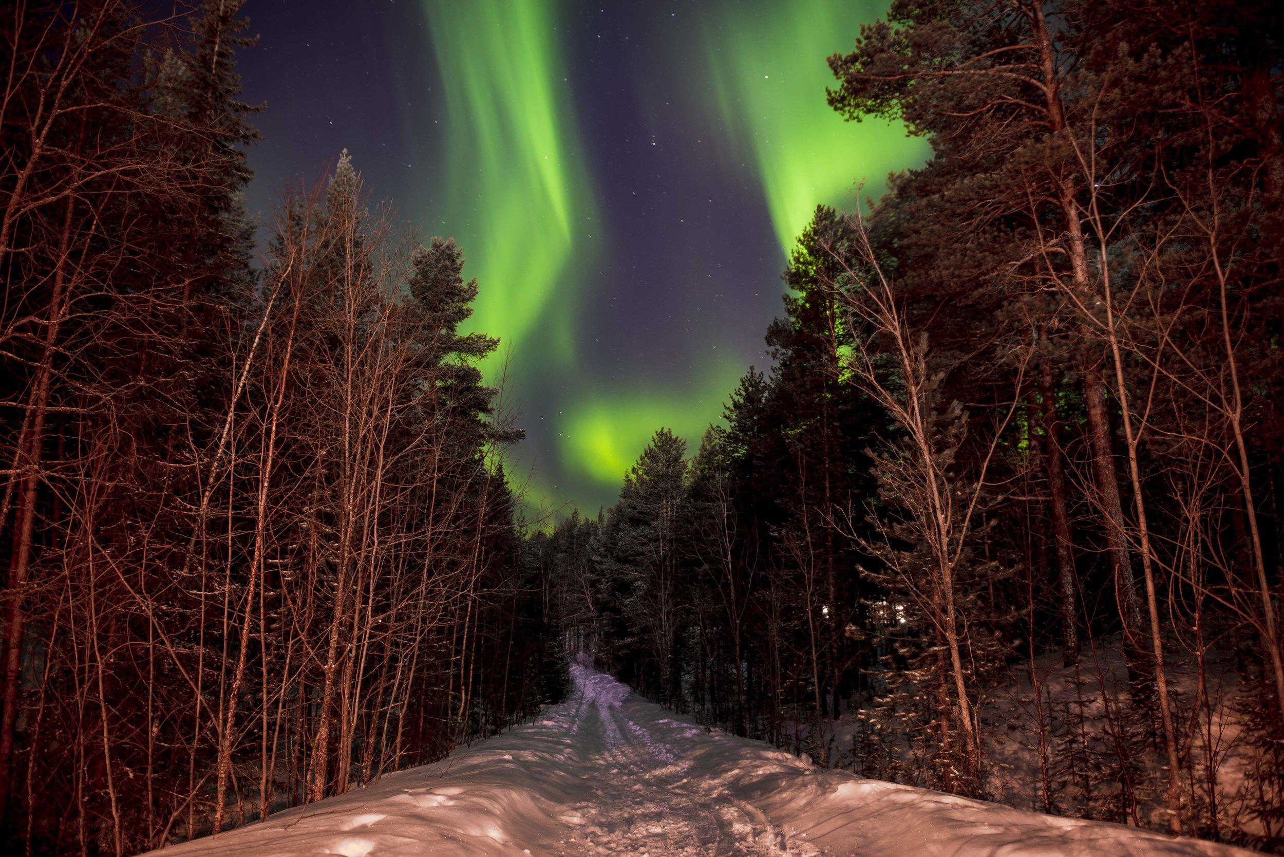 Monarch Lapland 1.jpg