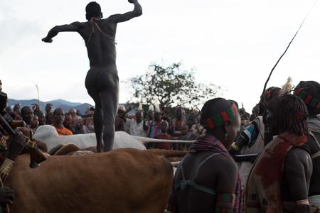 Hamar Bull jumper
