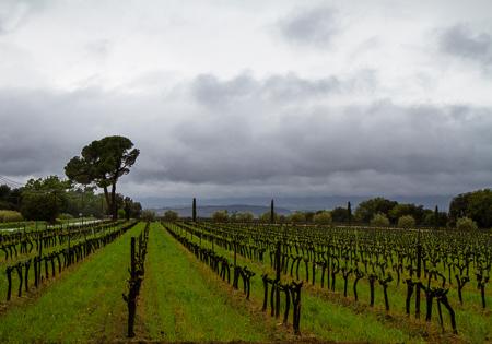 Chateau La Dorgonne vineyards