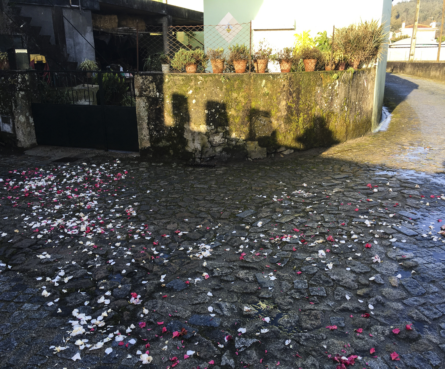 Petals strewn at house door to welcome Easter