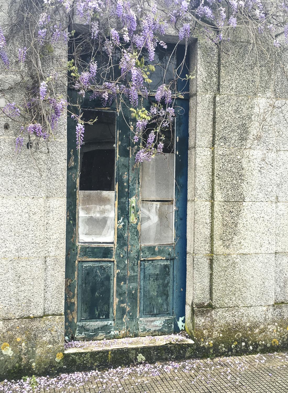 Yet more wisteria, doorway in Tui