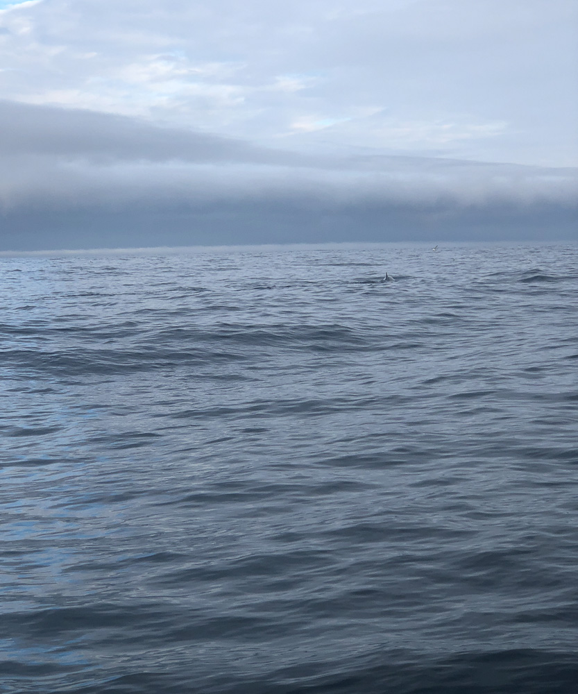 Picture of a whale when you only have your phone! Somewhere in there is a fin!