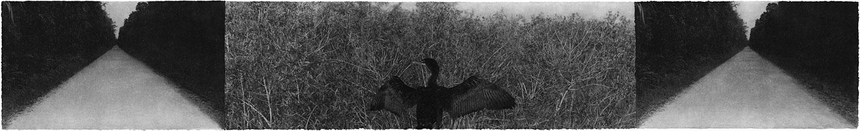 Everglades-01.jpg