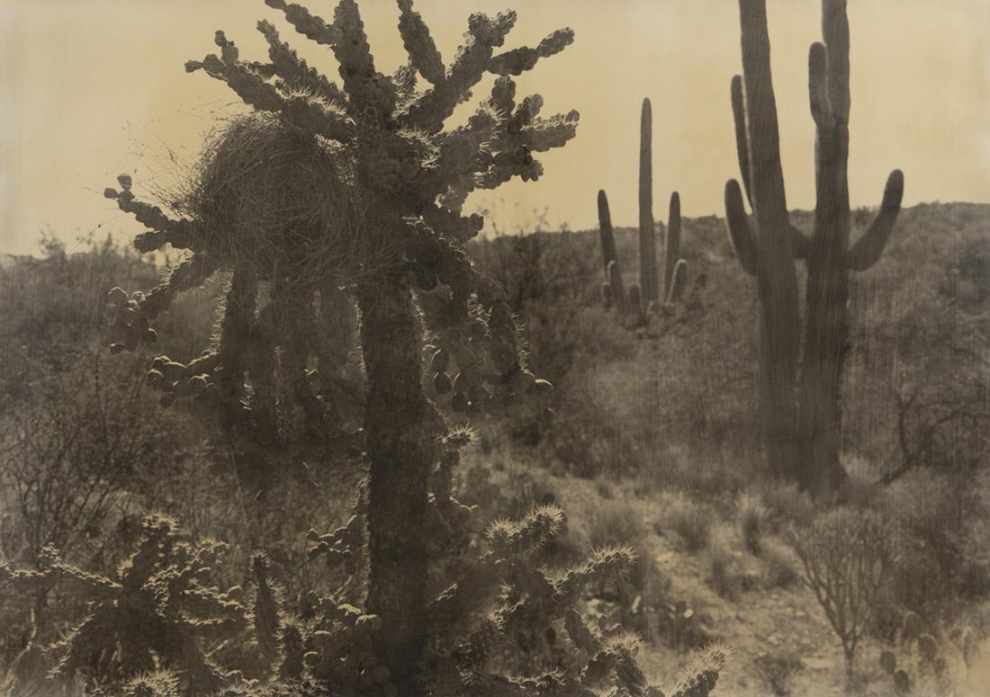 American Desert II 94-39.jpg