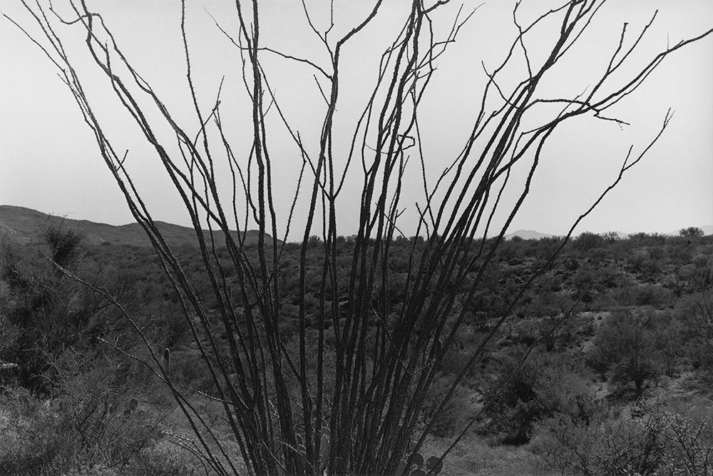 Desert 02-42.jpg