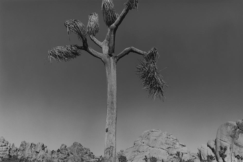 Desert 02-40.jpg
