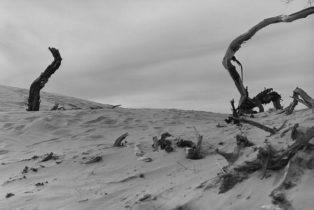 Desert 02-44.jpg