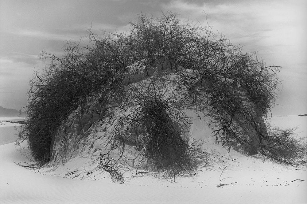 Desert 02-36.jpg