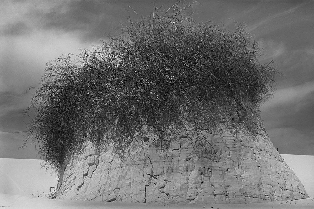 Desert 02-17.jpg