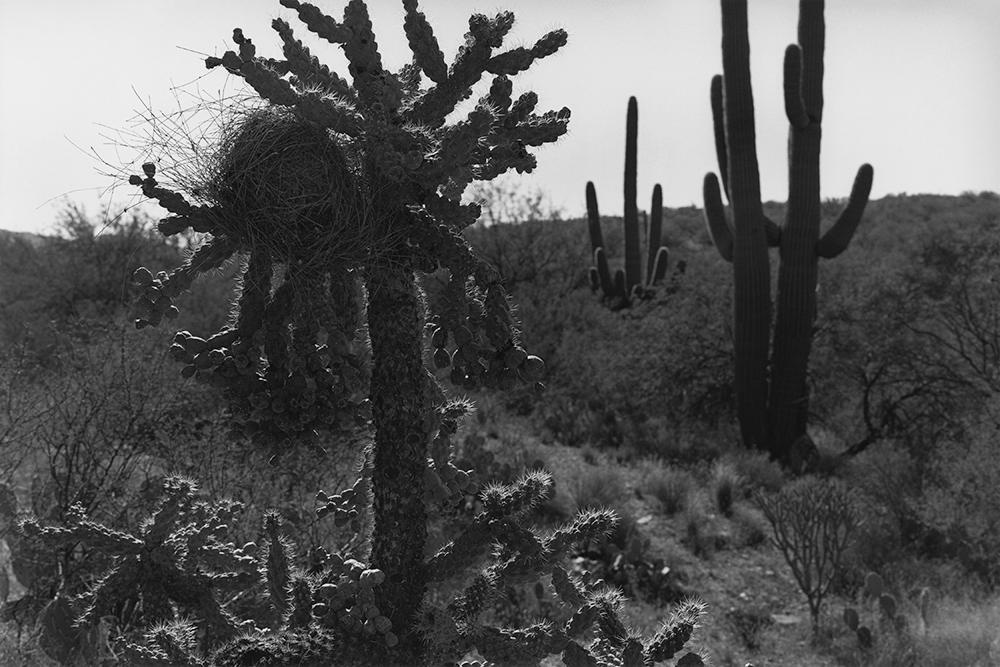 Desert 02-39.jpg