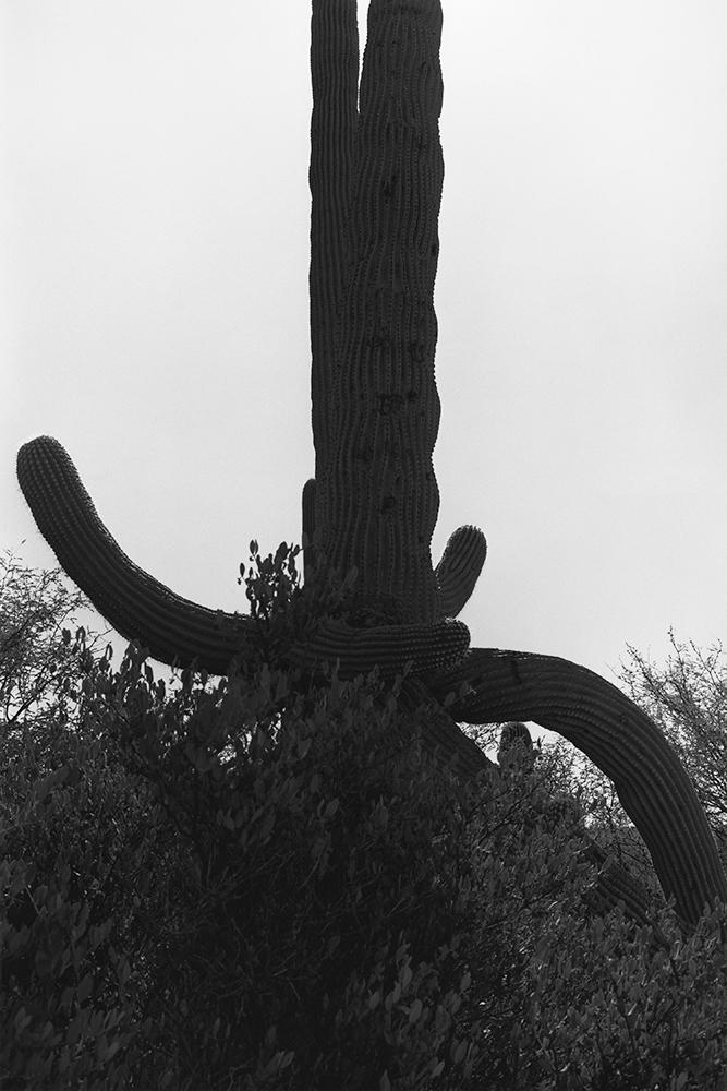 Desert 02-38.jpg