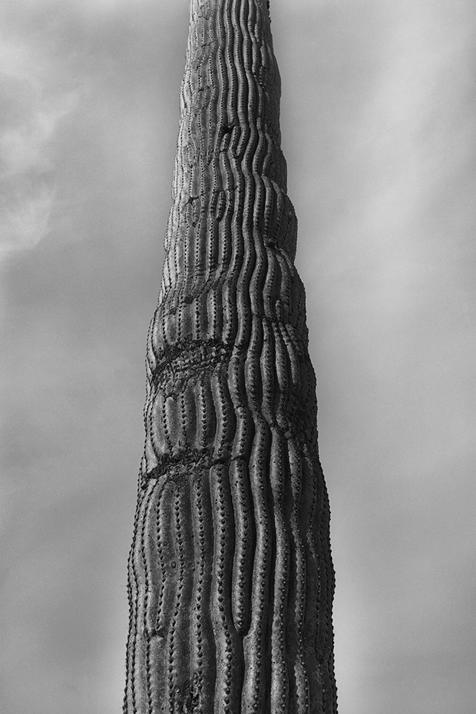 Desert 02-31.jpg