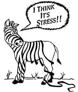 Zebras don't get ulcers.