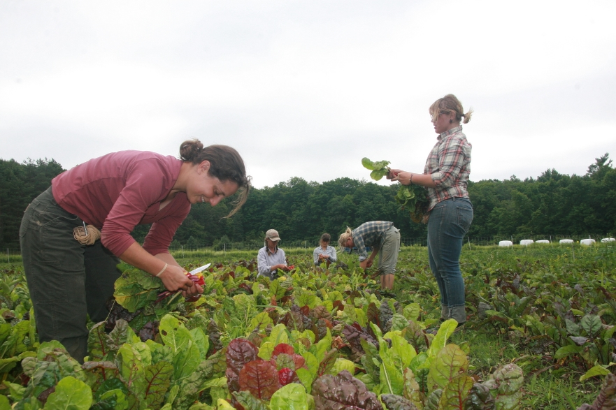 Harvesting Summer 2012 (41).JPG