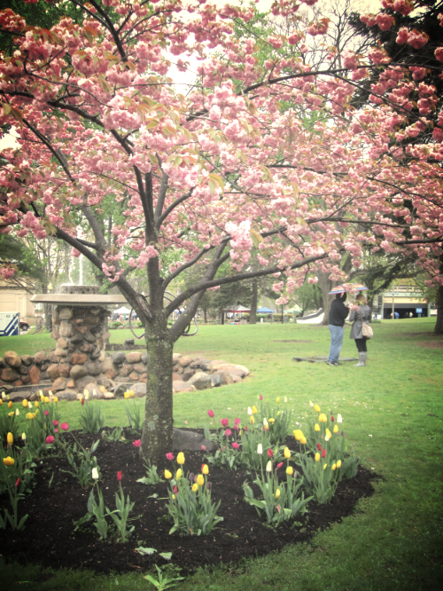 Huntington Tulip Festival, Heckscher Park