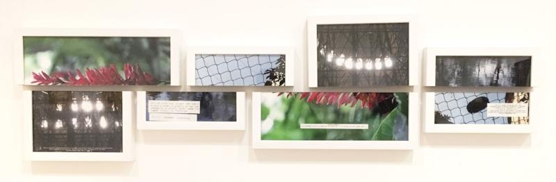 Shilpa Gupta (Indian, born 1976),  Untitled,  2014. Pigmented inkjet prints in split frames.