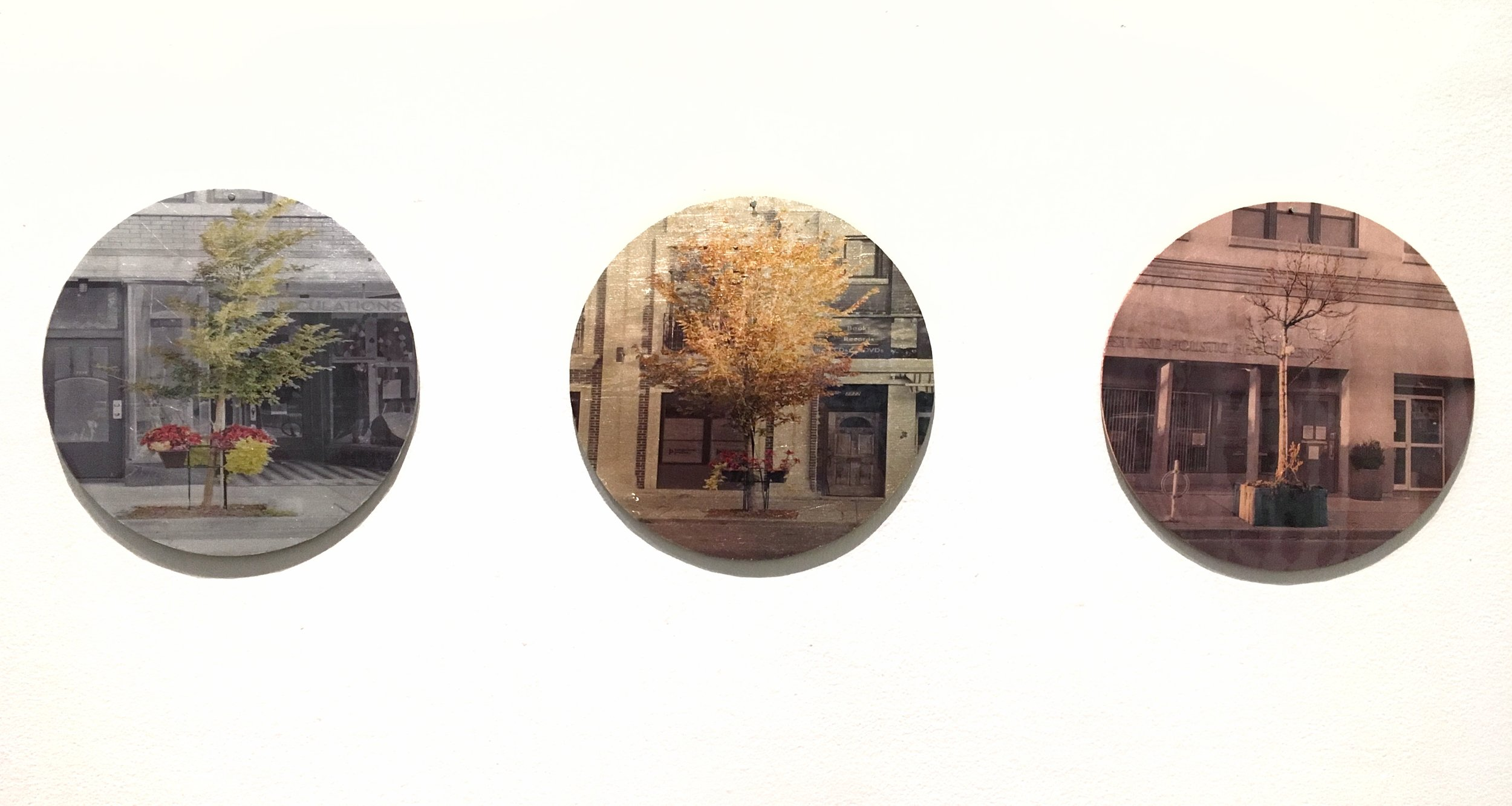 Nicola Woods, from series  The Trees Amongst Us,  acetate mounted on metal leaf.