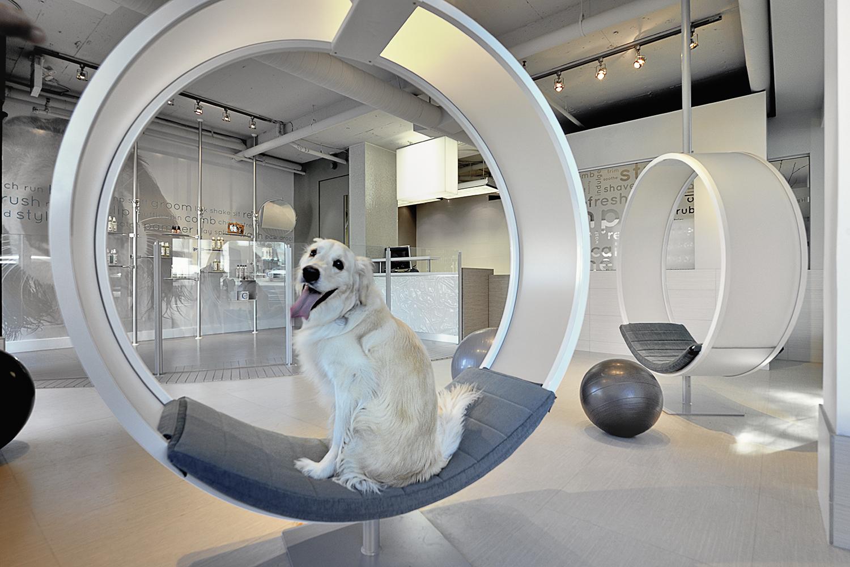 Dog_02.jpg