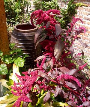 Gardenplant.jpg
