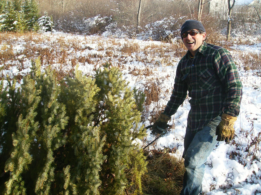 harvest time at the Christmas tree farm