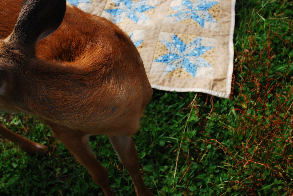 "Fawn with Fawn Quilt , c-print 16"" x 24"", 2011"