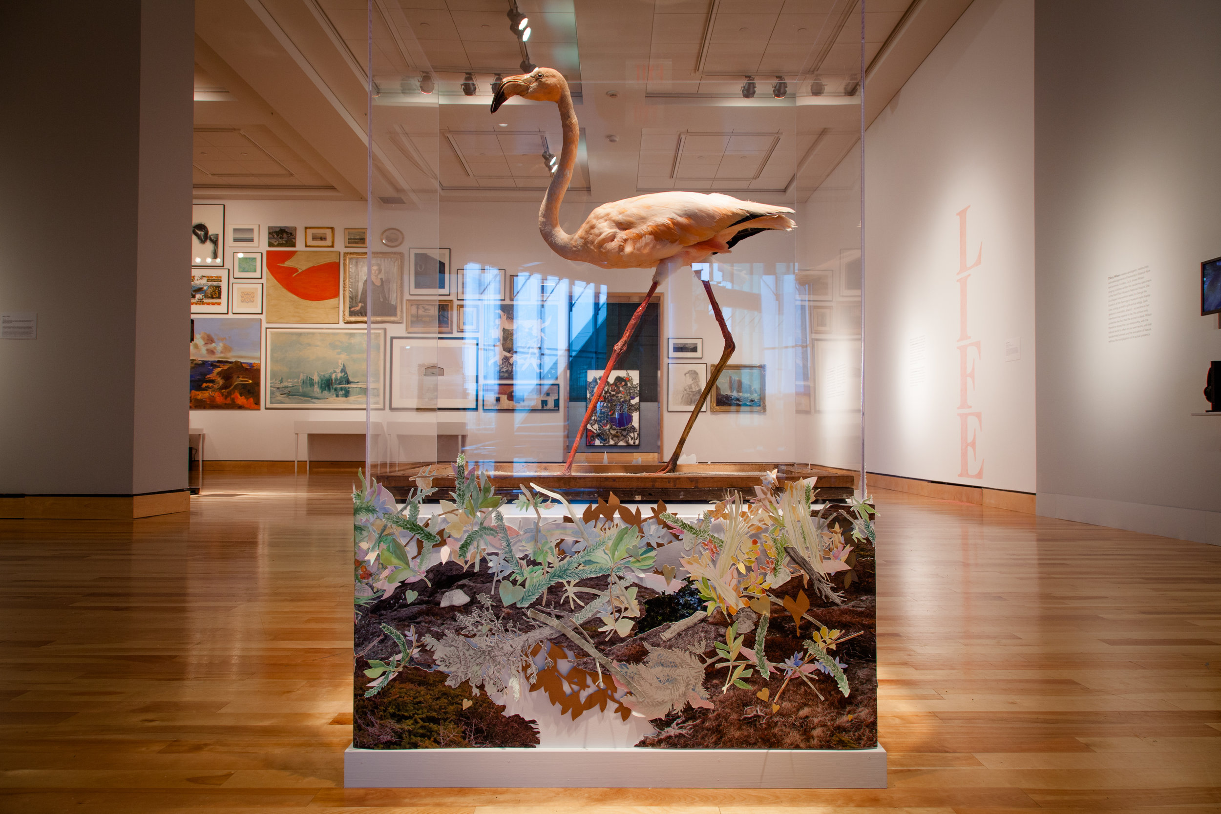 """Nest   collage: gouache, coloured paper and pencil, gold leaf, etching, and c-print on paper, 120"""" long, 18-22"""" high.   Nest  was constructed for a flamingo specimen in the collection of The Rooms (St. John's, NL). The bird was blown off course in the 1970's and seen by a fisherman flying across Newfoundland; the flamingo was shot and later donated to the museum's collection. This exhibition ( In Some Far Place,  curated by Mireille Eagan) marks the first time the bird was displayed to the public. A performance accompanies this piece— after composing a lullaby for the bird, during the opening reception for the exhibition, visitors were invited to sing with me, and together we attempted to lull the flamingo to sleep with awkward song."""