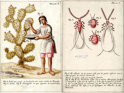 Left: A deer's tail is used to brush New World Cochineal insects from Opuntia pads for dye production,Right: male and female New World Cochineal