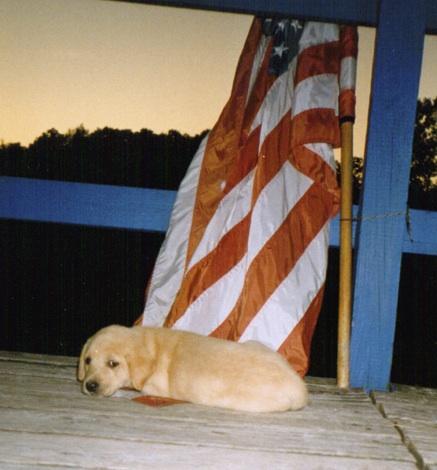 Puppy Deek w flag.jpg