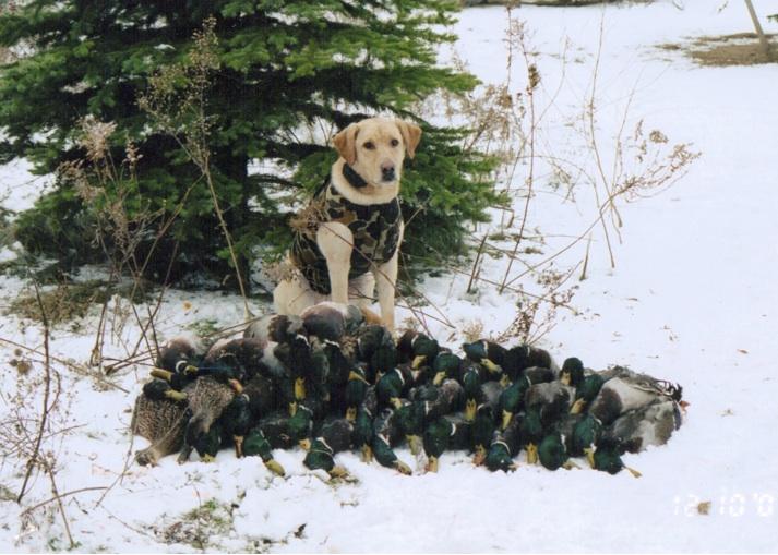 Deek ducks snow.jpg