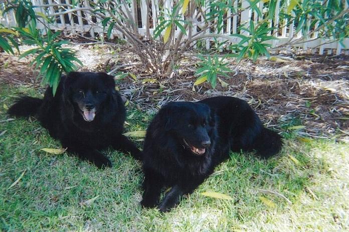 Boomer & Zoie